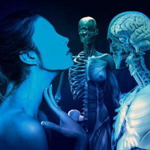 Загадки про органы человека